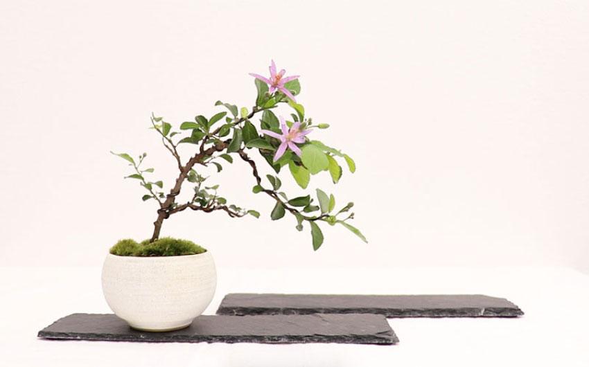 Thumbnail bonsai